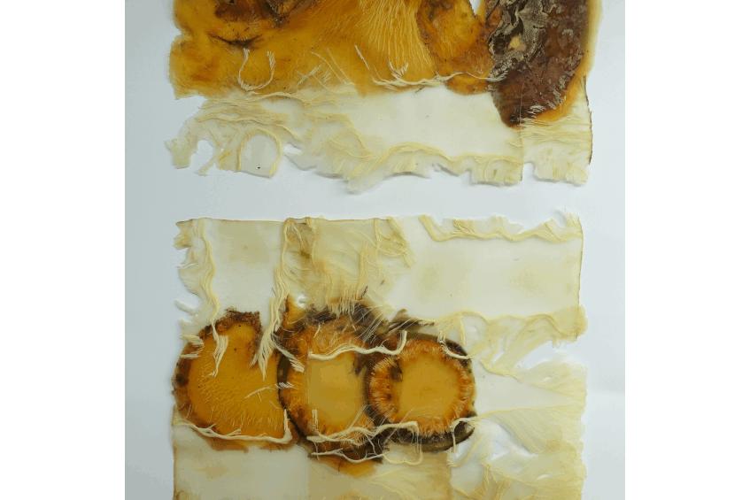 Vegetable-and-abstract-series-11-detail-Angelique-van-der-valk